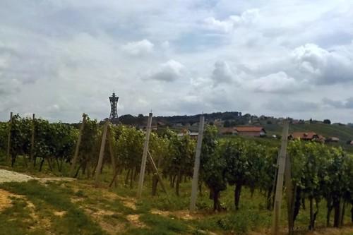 A szőlők mögött található a Vinarium kilátó