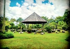 Jublee Recreation Ground, 93450 Kuching, Sarawak https://goo.gl/maps/bWxDgm2HtN92  #travel #holiday #Asian #Malaysia #Sarawak #Kuching #travelMalaysia #holidayMalaysia #旅行 #度假 #亚洲 #马来西亚 #沙拉越 #古晋 #trip #马来西亚旅行 #traveling #马来西亚度假 #公园 #garden #Park #tree #re