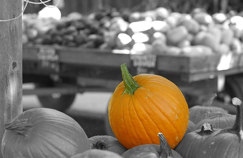 Pumpkins are hot around this time of year.