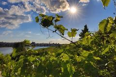 Dortmund (Germany): Summer starts at Lake Phoenix