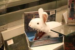 Scary rabbit