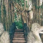 "Monkey Temple Ubud <a style=""margin-left:10px; font-size:0.8em;"" href=""http://www.flickr.com/photos/36521966868@N01/16145772/"" target=""_blank"">@flickr</a>"