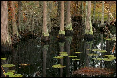 mangrove7