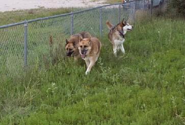 Walking the fenceline