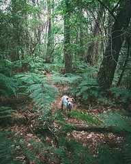Day 781 - We're nearly at the southwest coast of France. We've been walking through lots of pine forests. Some of the forests are laden with ferns, others have floors of sands. I prefer the ferns, but of course anything is preferable to sand - fills your