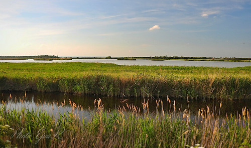 Reed landscape /Nádas Táj