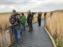 SDBWS at Rainham Marshes by Rebecca Dunne