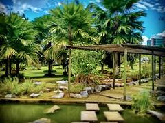 Jublee Recreation Ground, 93450 Kuching, Sarawak https://goo.gl/maps/QTSLqcAiM4o  #travel #holiday #Asian #Malaysia #Sarawak #Kuching #travelMalaysia #holidayMalaysia #旅行 #度假 #亚洲 #马来西亚 #沙拉越 #古晋 #trip #马来西亚旅行 #traveling #马来西亚度假 #green #公园 #Park #蓝天 #bluesk