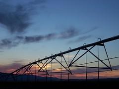 Irrigation at Sunset