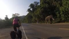 wir kreuzen einen Elefanten