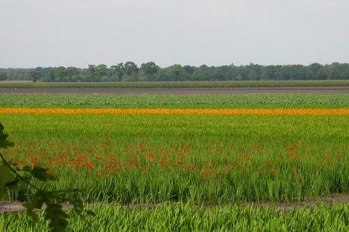Holland bloemenland