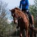 Häst och ryttare i gemensamt arbete