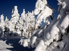 Serbian Snow