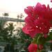 Phuket - 11.jpg