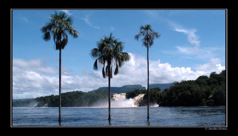 Palmeras en la laguna de Canaima - Venezuela