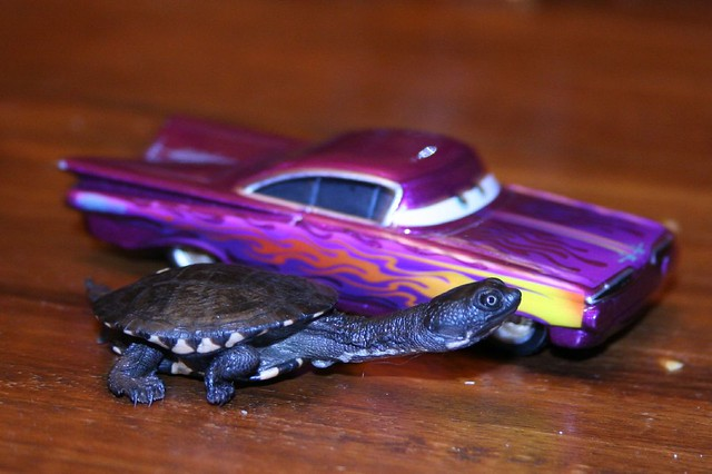 The turtle and the matchbox