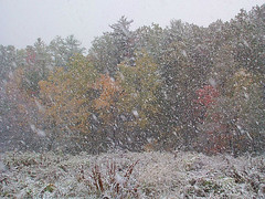 bottom of the First Field in an October snowstorm