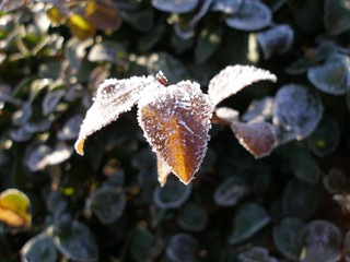 Frost on the plants...