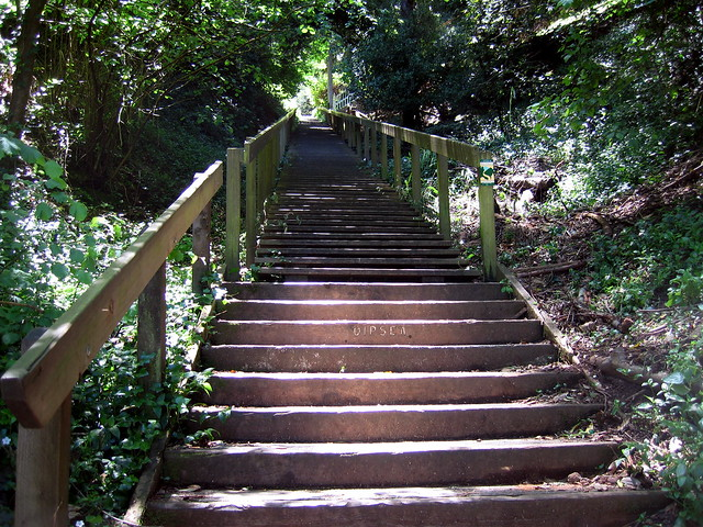 Dipsea  Stairs Mill Valley