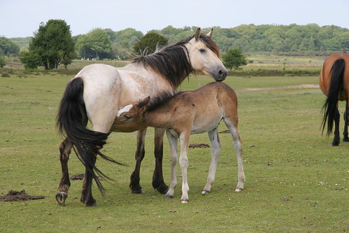 Mother and Foal by webmink