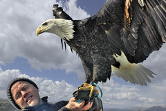 Eagle of dignity