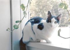 Aremid on the balcony (Summer 1997)