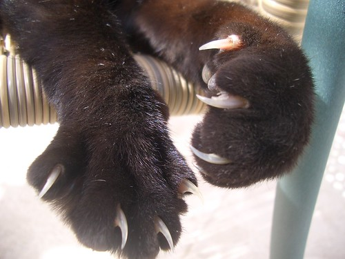 Paws and Claws de Mink, sur Flickr