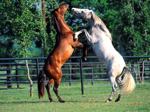 Brown horse and White horse | Lovegeria