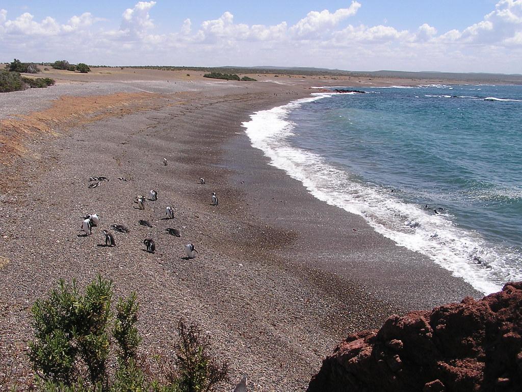 Argentina Pinguinos en Punta Tombo 83