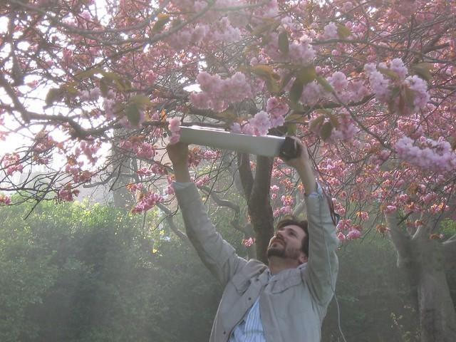 scanning blossoms, herbert park, dublin