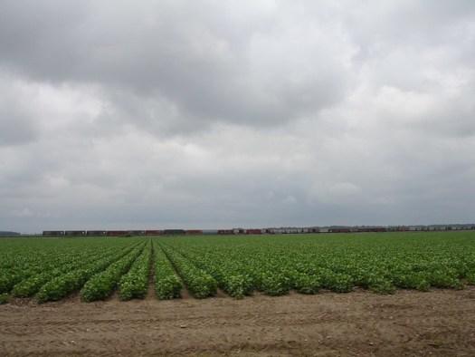 Cotton Rows, Leland MS