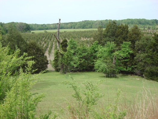 View from Top of Mangum Mound, on Natchez Trace MS