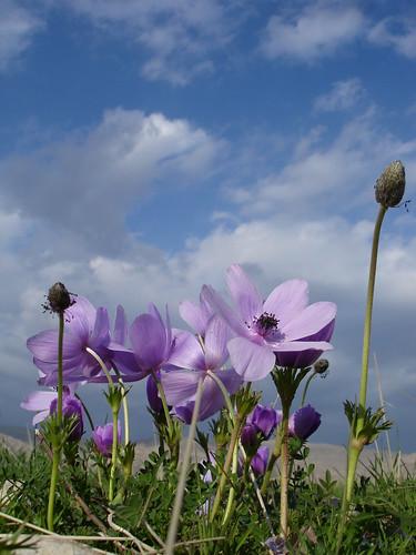 Spring Fantasy by kezwan