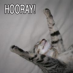 Hooray for LOLcats