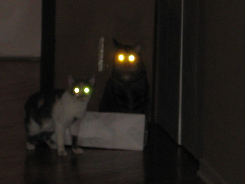 Demon Cats