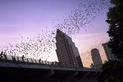 The bats fly over Austin
