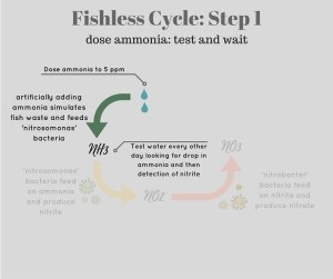 How to Fishless Cycle a New Aquarium  SpecTanks