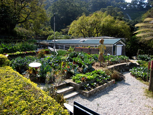 Organic vegetable garden, Kadoorie Farm, New Territories, Hong Kong