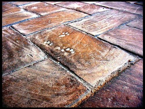 Cat footstamps on ancient red bricks