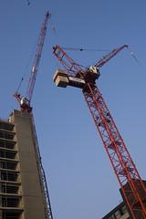 cranes...