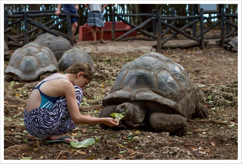 Alimentando a la tortuga