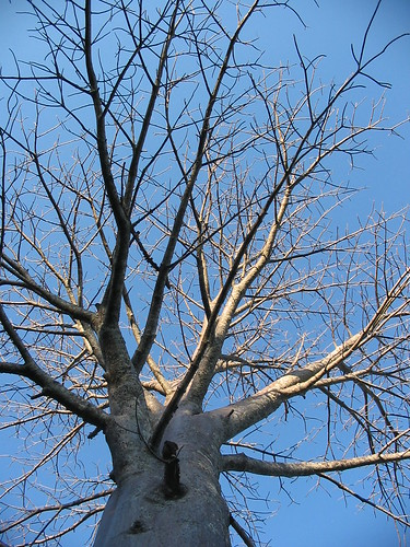 Baobab @ Punda