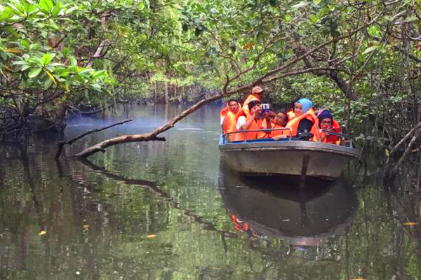 Bintan Discovery Mangrove_01