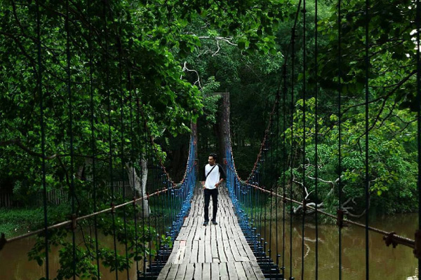 Hutan Punti Kayu 1