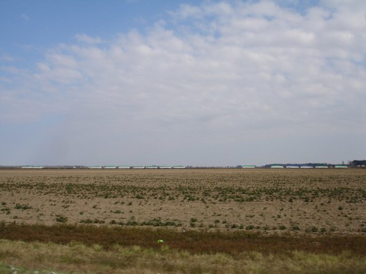 Cotton Modules in the Distance (overturned weevil trap in the foreground), Scott MS