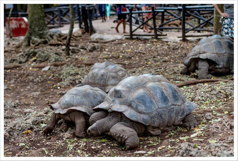 Tortugas colegas