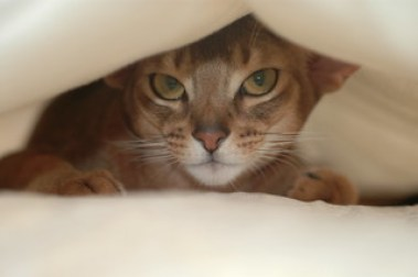 """Stress and Anxiety in Cats """"I was hiding."""""""