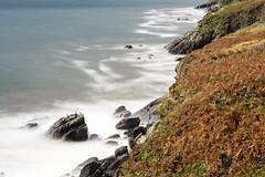 Cormorants on #Dingle cliffs