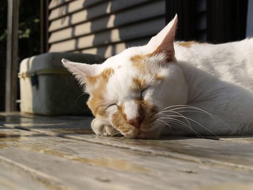 Cat in sleep