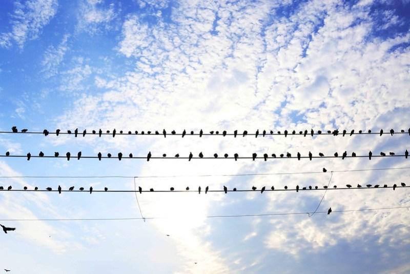 Birds' Eye View